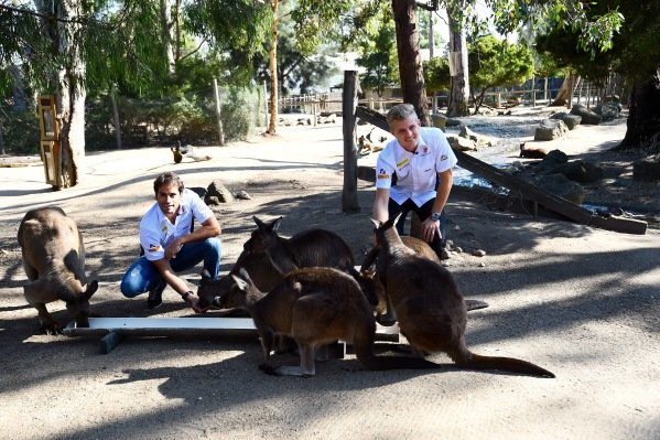 Marcus Ericsson (SWE) Sauber and Felipe Nasr (BRA) Sauber visit Melbourne Zoo and feed Kangaroos at Formula One World Championship, Rd1, Australian Grand Prix, Preparations, Albert Park, Melbourne, Australia, Wednesday 16 March 2016.