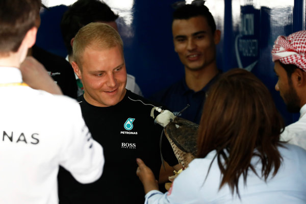 Bahrain International Circuit, Sakhir, Bahrain.  Sunday 16 April 2017. Valtteri Bottas, Mercedes AMG, meets a bird of prey before the drivers parade. World Copyright: Glenn Dunbar/LAT Images ref: Digital Image _X4I0862